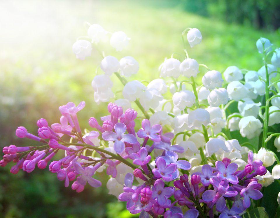 prace-ogrodowe-w-maju