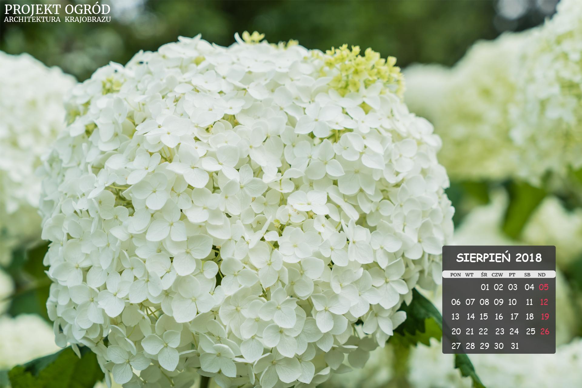 kalendarz-b-sierpien-1920x1280